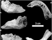La mandibola trovata a Mezzena (da PlosOne)